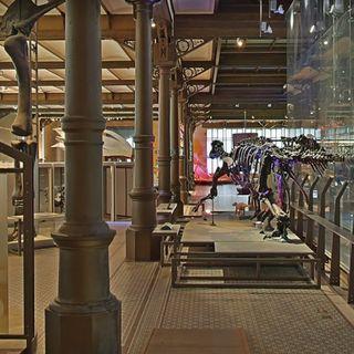 Visite virtuelle du Musée des Sciences Naturelles